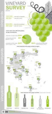 infographic vineyard